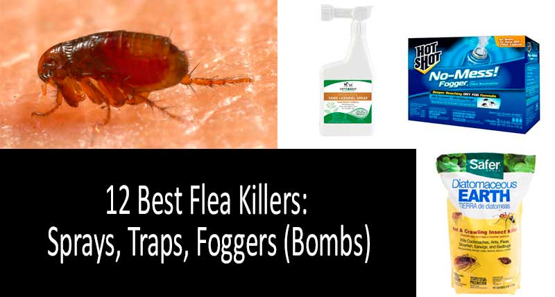 flea bombs for house reviews