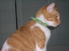 beastie bands cat collars reviews